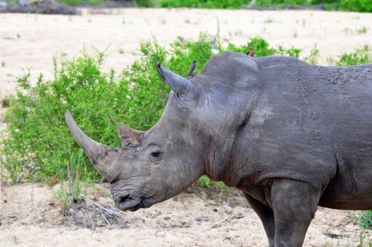 Safari at MalaMala