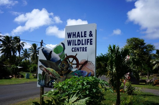 Guide to the Cook Islands with kids