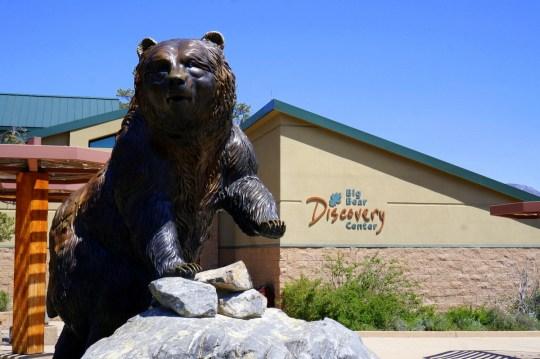 Big Bear in summer