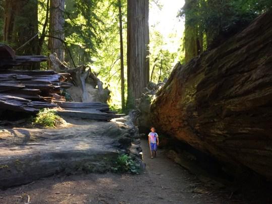 Oregon Road Trip Itinerary