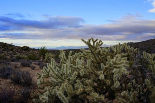 Exploring the Mojave National Preserve
