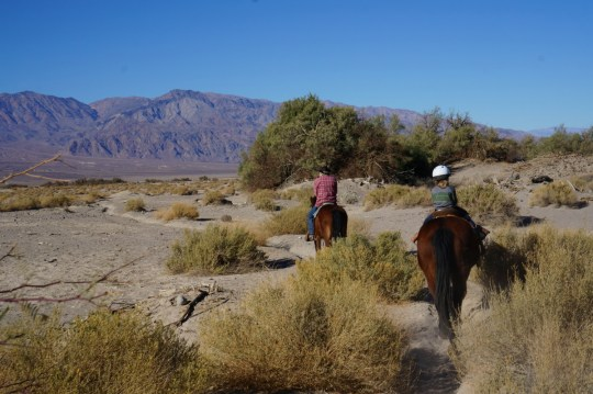 What to do in Death Valley with Kids - Horseback Riding