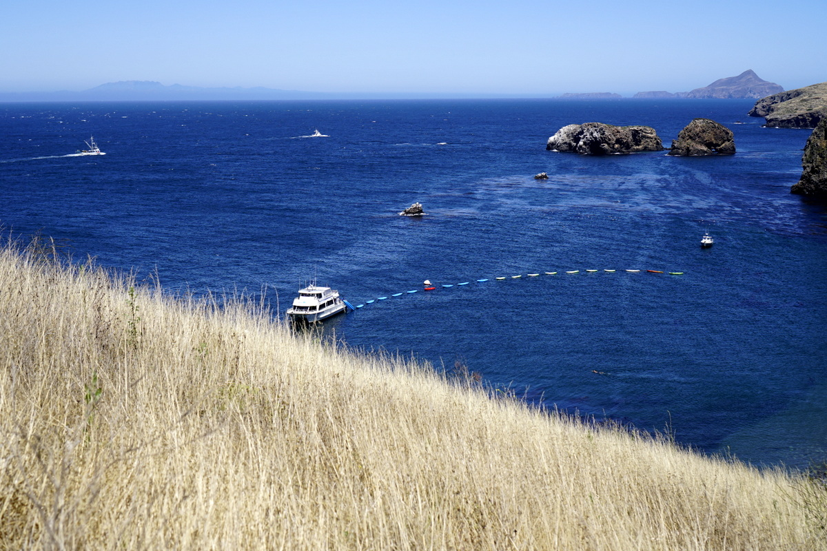 Guide to Channel Islands National Park (with Kids) - No Back Home