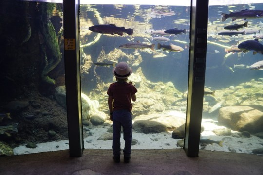 Turtle Bay Exploration Park is a must visit attraction in Northern California for Kids