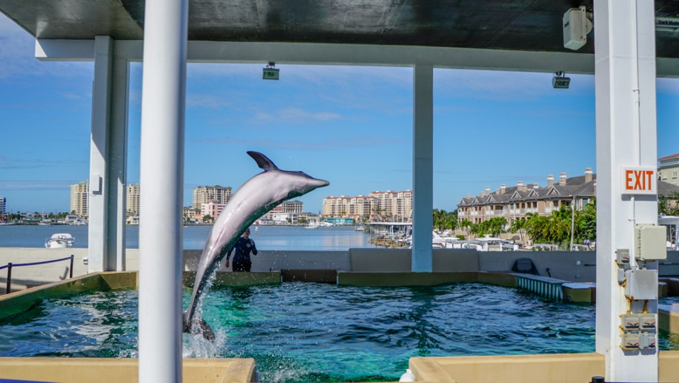 Things to do in Clearwater Florida - Meet Winter the Dolphin