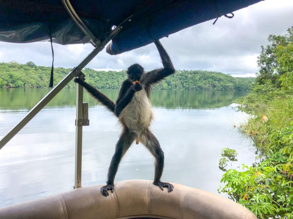 Monkey Island at Las Lagunas hotel near Flores Guatemala