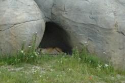 Da ist sie also, die legendäre Höhle der Löwen.