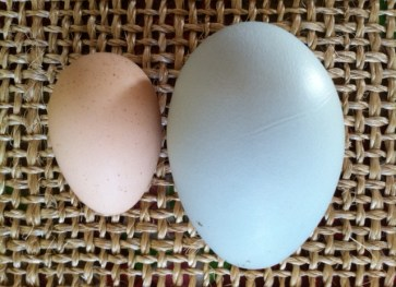 The egg on the left is from our youngest, the one on the right from our oldest.