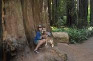 shasta redwood me