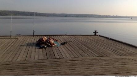 На Клязьминском водохранилище рыбака укусила гадюка