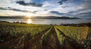 best okanagan winery tours