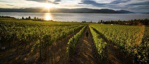 winery tours kelowna