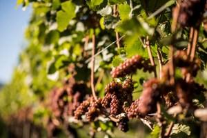 book a winery tour in the okanagan