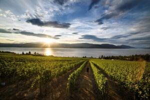 okanagan vineyard tours
