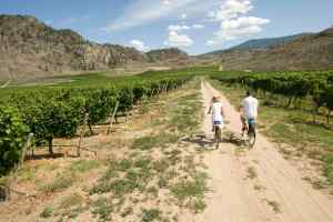 cycle winery tours