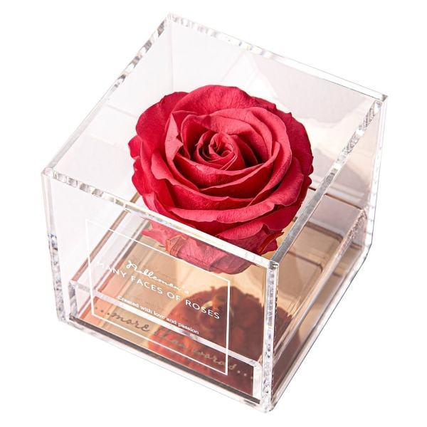 róża-koral
