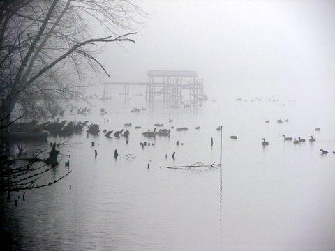 foggy-forrsythe-morn.jpg