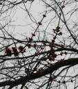 spring-buds.jpg