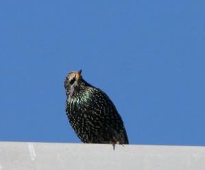 two-tone-beak