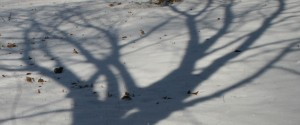 snow-shadows