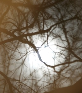 moon-obscured-by-branches-a