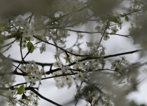 spring-sky