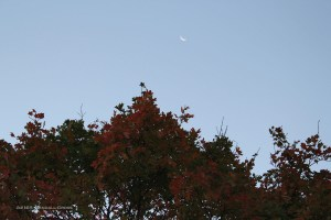 Apparently the first bright foliage of fall is already beginning to show up in the KC area