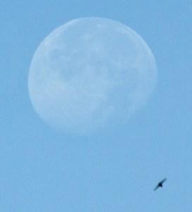 Friday am moon