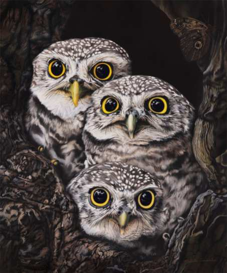 Nikita Coulombe-Three Little Owls low res