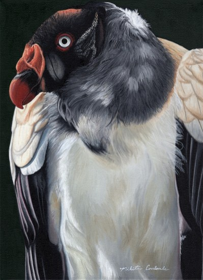 Nikita Coulombe-Vulture low res