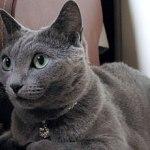 猫ヘルニア