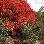京都 紅葉散策