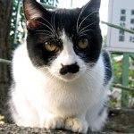 原宿野良猫日記-3