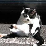 原宿野良猫日記-6 チャーリー再び