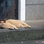 原宿野良猫日記-8