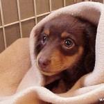 多摩センター動物病院 獣医師に賠償命令
