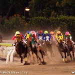 大井競馬場 夜のトゥインクルレース
