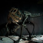 『恐竜王国2012』で気になった事(1)