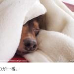 冬はなぜ寒い?