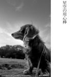 夕陽が呼んでいる(Leica X2)
