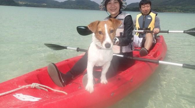 石垣島愛犬とカヌーで冒険