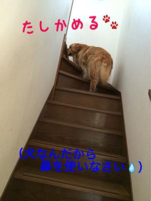 ケン太5_300