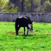 Nasze konie - Agroturystyka Na skraju Parku Mużakowskiego
