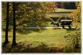 Park Mużakowski - wpisany na listę UNESCO - na zdjęciu nasza bryczka