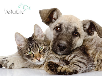 Vetable Mobile Vet Fort Collins