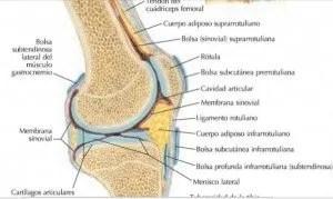 articulacion-de-la-rodilla-3-638