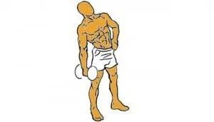 flexiones mancuerna musculos abdomen