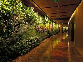 Corridor Vertical Garden detail, Sofitel Palm Jumeirah, Dubai