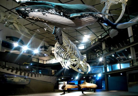 iziko-south-african-museum-__large_1000_692_s_100