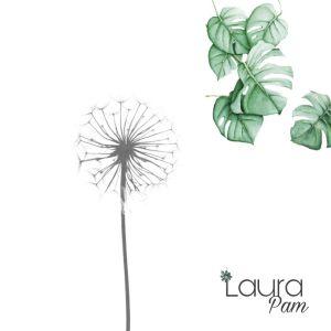 Laura Pam identidad de marca Instagram
